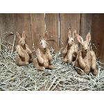 My Primitive Spring Grass-Hoppers Epattern-my primitive saltbox,prim,primitive,pattern,epattern,instant download,easter,spring,rabbit,bunny,bunnies,hoppers,grass hoppers,